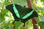 papillon, forêt, vert, écologie