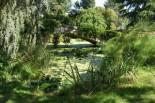 paysage, arbre, herbe, nénuphar